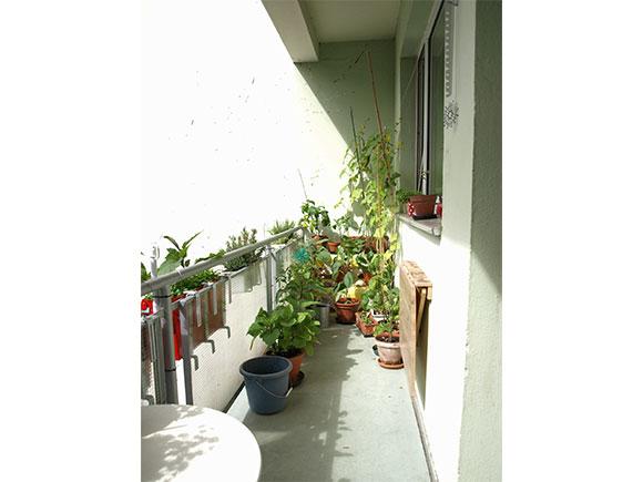 Balkon-heute-morgen