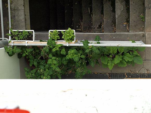Tomaten-und-Auberginen-im-Hof