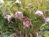 Blume-1
