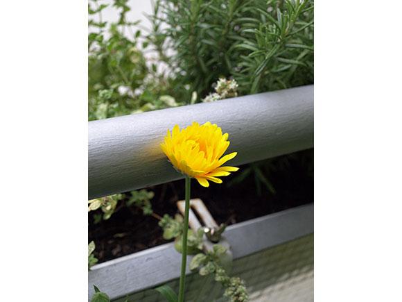 blume-gelb-1